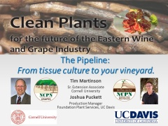 The Pipeline: Tissue Culture to your vineyard