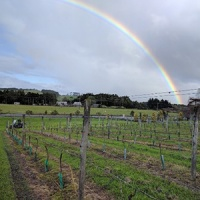 vineyard rainbows at the hunting lodge in new zealand