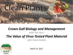 Crown gall management and Economic impact