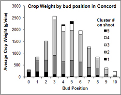 'Concord' yield by bud position