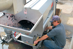 Michael Reidy '06 adjusts the crusher-destemmer at Hazlitt 1852 Vineyards