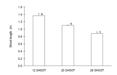 Shoot number affected shoot length.  Leaving more shoots per vine resulted in shorter shoots.