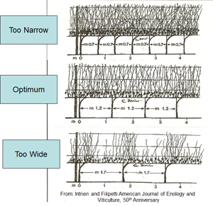 graphic showing plant spacing